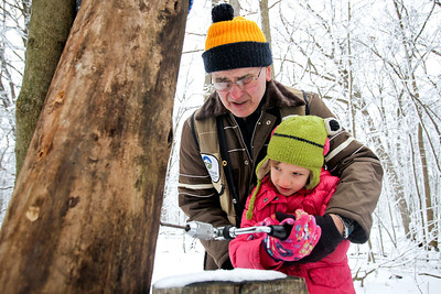 Jenny Kane - jkane@shawmedia.com McHenry County Conservation District volunteer Warren Spencer, of Crystal Lake, helps Avery Ochwat, 6, of Cary, drill a hole into a stump. Spencer explained to groups at the Festival of the Sugar Maples the proper size that a hole needs to be in order to get sap from a sugar maple tree at the Coral Woods Conservation Area in Marengo.