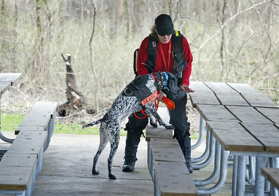 Handler Jenni Bidner and Liebchen, a German short haired pointer, of Crystal Lake, track a scent in a picnic shelter during a recent training exercise. (AP Photo - Northwest Herald/ H. Rick Bamman) ***CHICAGO LOCALS OUT***