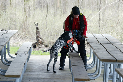 Jenni Bidner and Liebchen a German short haired pointer of Crystal Lake, track a scent in a picnic shelter. (AP Photo - Northwest Herald/ H. Rick Bamman) ***CHICAGO LOCALS OUT***