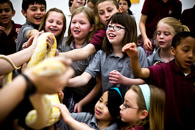 Lance Booth - lbooth@shawmedia.com Children at Immanuel Lutheran School look at a python that was brought in by Animal Quest: Education through Entertainment on Monday, March 19, 2012. A variety of animals from throughout the world were shown at the event to help educate children about animals.