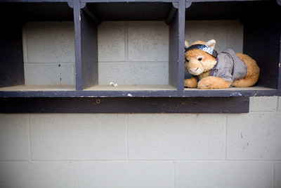 Jenny Kane - jkane@shawmedia.com Tues. March 20, 2012, A stuffed animal rests in a helmet cubby of James B. Conant High School's dugout during their game against Cary-Grove at Cary-Grove.