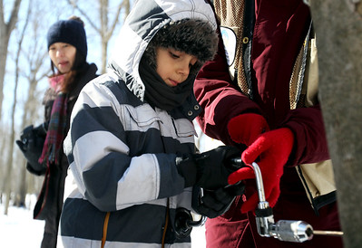Monica Maschak - mmaschak@shawmedia.com Elijah Neumeyer, 7, learns how to drill into a tree to tap for sap during the Festival of the Sugar Maples at Coral Woods Conservation Area on Saturday, March 2, 2013.