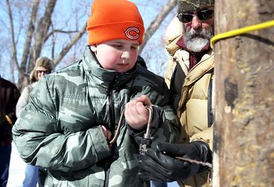 Monica Maschak - mmaschak@shawmedia.com Steven Ruhnke, 9, learns how to drill into a tree to tap it for sap with the help of volunteer Alan Myers at the Festival of the Sugar Maples at Coral Woods Conservation Area. Antendees learned how maple syrup was discovered, how maple trees produce sap and how sap is collected from trees.