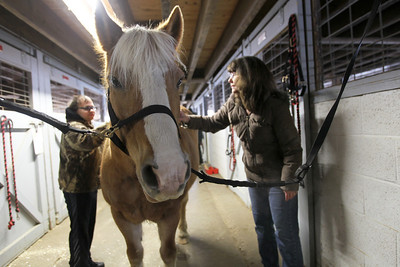 Monica Maschak - mmaschak@shawmedia.com Danny Guelzo (left), 21, has his mother Lisa help him brush Maggie, the horse, in the last Animal Assisted Activities therapeutic class at Main Stay in Richmond. The class, for those with developmental and intellectual dissabilities, is a Pathways Program offered through McHenry County College and the Special Education District of Mcenry County (SEDOM). In this last session, the students demonstrated skills they learned in the eight week program.