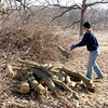 Volunteers help with clean up and removal of two Mulberry trees which are considered evasive and non-native to the Forest Preserve at Bliss Woods Forest Preserve in Sugar Grove, IL on Saturday, March 23, 2013 (Sean King for The Kane County Chronicle)
