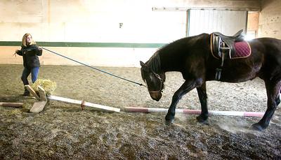 hnews_adv_vets_horses1