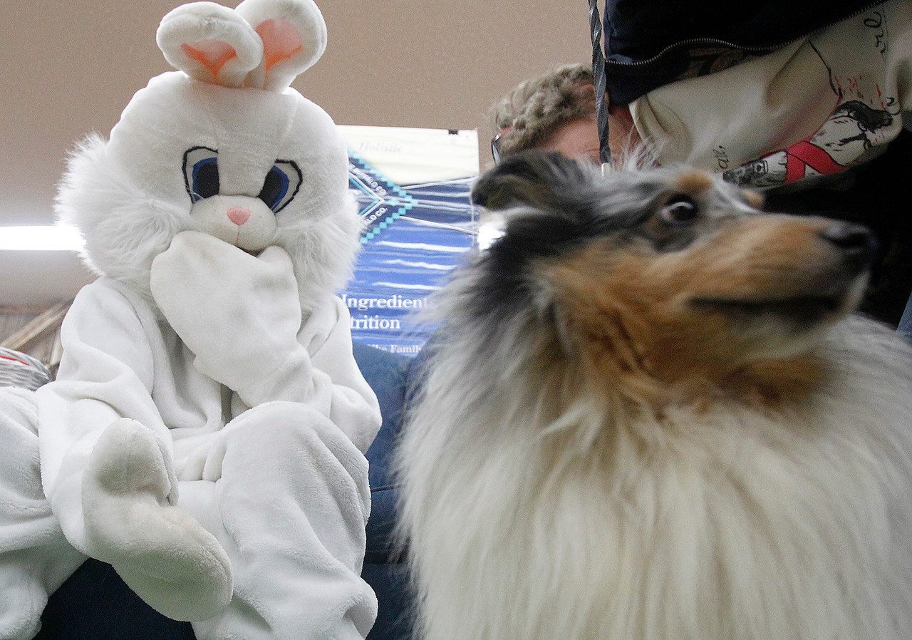 hnws_sun329_easter_pets_01