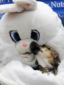 hnws_mon330_easter_pets_01