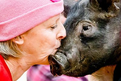 hnews_wed0302_Kiss_Pig1.jpg
