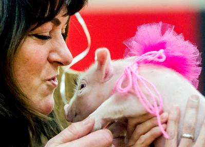 hnews_wed0302_Kiss_Pig3.jpg