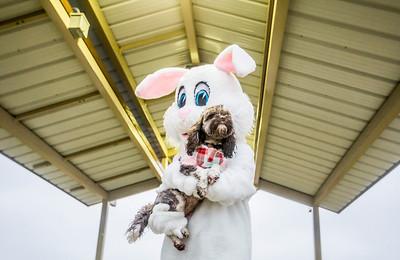 hnews_adv_Easter_Dog3.jpg