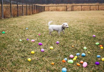 hnews_adv_Easter_Dog6.jpg
