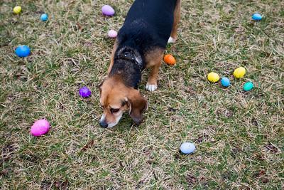 hnews_adv_Easter_Dog8.jpg