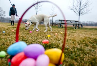 hnews_adv_Easter_Dog7.jpg