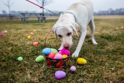 hnews_adv_Easter_Dog1.jpg
