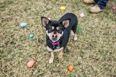 hnews_adv_Easter_Dog5.jpg