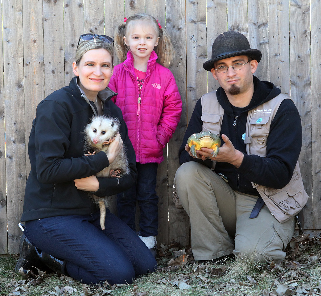 Candace H. Johnson-For Shaw Media Jessica and Steve Reedy, founders of Animal Quest, with their daughter, Ava, 4, at their home in Antioch. Jessica was holding Opal, an opossum, and Steve was holding, Blotus, a giant African bullfrog, two exotic animals among many they bring to their animal show.