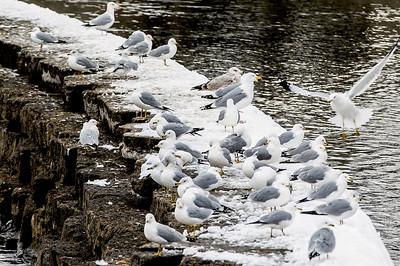 hnews_adv_snow_birds.jpg