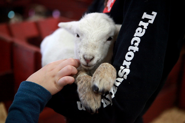 Jenna Peters, 15, of Burlington holds an 11-day-old sheep during the Kane County Farm Bureau's 34th Annual Ag Days at the Mooseheart field house March 22.