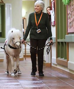 HPLAY_0308_Mini_Horse_