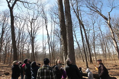 Candace H. Johnson-For Shaw Media Volunteer Rachel Utt, of Des Plaines takes a group on a Maple Syrup Hike and stops at a sugar maple tree dripping sap into buckets used for making maple syrup at Ryerson Woods in Riverwoods.(3/11/18)