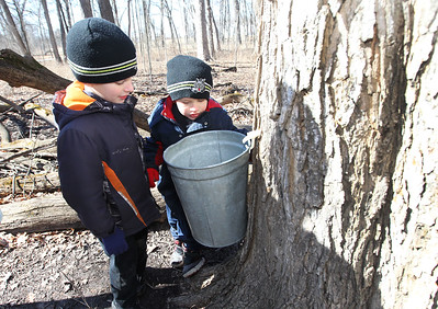Candace H. Johnson-For Shaw Media Mikey Kos, 7, of Round Lake Park and his brother, Christopher, 5, look at a sugar maple tree dripping sap into a bucket during a Maple Syrup Hike at Ryerson Woods in Riverwoods.It takes forty gallons of sap to make one gallon of maple syrup.(3/11/18)