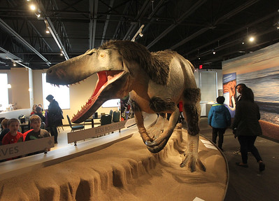 Candace H. Johnson-For Shaw Media People walk by a model of a Dryptosaurus dinosaur on display during the Grand Opening of the Lake County Forest Preserves Dunn Museum on Winchester Road in Libertyville.(3/24/18)