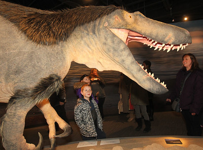 Candace H. Johnson-For Shaw Media Dylan Andruszczak, 7, of Fox Lake looks up at a model of a Dryptosaurus dinosaur during the Grand Opening of the Dunn Museum in the General Offices of the Lake County Forest Preserves on Winchester Road in Libertyville.Dylan's mother, Christine, was standing close by on the right of the dinosaur.This full size model of the Dryptosaurus dinosaur is the only accurate model in the world created by paleoartist, Tyler Keillor. (3/24/18)
