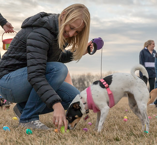 Dogs were finding Easter eggs filled with treats Wednesday, March 28, 2018 at the annual Doggy Easter egg hunt at Hoffman Dog Park in Cary. Treats are placed inside the eggs for the dogs.  KKoontz- For Shaw Media