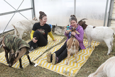 Candace H. Johnson-For Shaw Media Suzy Schmitt and her sister, Daphne Wills, both of McHenry stretch and take photos while taking a Goat Yoga class during Girls Day on the Farm at Kamins Farm Sanctuary in Grayslake. (3/2/19)