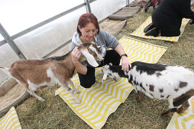 Candace H. Johnson-For Shaw Media Nikki Nyhuis, of Lake Villa cuddles with some goats before taking Goat Yoga during Girls Day on the Farm at Kamins Farm Sanctuary in Grayslake. (3/2/19)