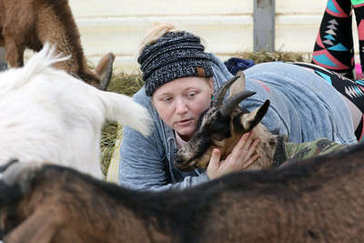 "Candace H. Johnson-For Shaw Media Jennifer Zimmer, of Round Lake spends her ""Cuddles"" time with a goat after taking Goat Yoga during Girls Day on the Farm at Kamins Farm Sanctuary in Grayslake. (3/2/19)"