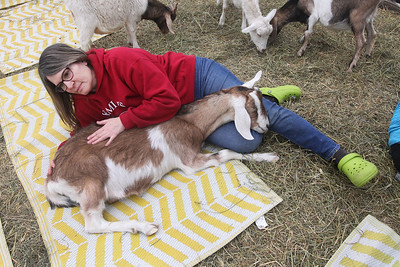 "Candace H. Johnson-For Shaw Media Sharon Rice, of Round Lake Beach pets a sleeping goat resting on her lap for ""Cuddles"" time after Goat Yoga during Girls Day on the Farm at Kamins Farm Sanctuary in Grayslake.Rice was at the event with her daughter, Taryn Stonelake, of Lindenhurst. (3/2/19)"