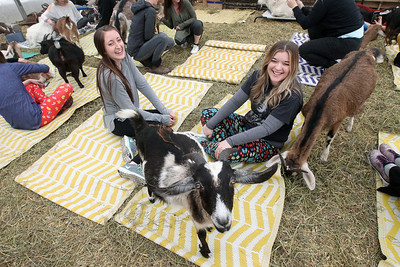 "Candace H. Johnson-For Shaw Media Rachel Paull, of Spring Grove and Kristine Waczinski, of Lake Villa share a laugh as they watch a goat during ""Cuddles"" time with the goats during Girls Day on the Farm at Kamins Farm Sanctuary in Grayslake. (3/2/19)"