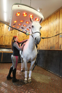 Candace H. Johnson-For Shaw Media Larissa Holmes, a working student, gets a Lipizzan horse named, Pluto Gratia, ready for a training session as he stays warm under a heat lamp during the Tempel Lipizzans Behind-the-Scenes-Tour at Tempel Farms in Old Mill Creek. The next tours are on April 13th and May 11th. (3/9/19)