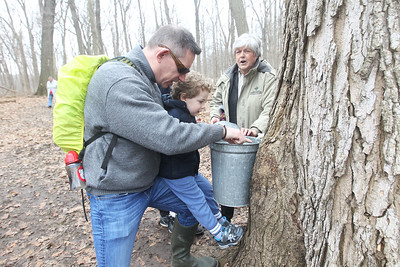 Candace H. Johnson-For Shaw Media Steve Avadek, of Northbrook and his son, Graydon, 3, look at sap coming out of a sugar maple tree through a spile into a bucket while Stancia Kalmus, of Lincolnshire, a volunteer, stops by the tree as she leads a group on a maple syrup hike at Ryerson Woods in Riverwoods. Avadek also had his son, Asher, 10, and daughter, Ellie, 7, with him. (3/24/19)