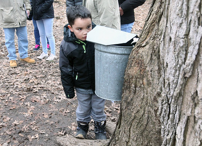 Candace H. Johnson-For Shaw Media Ryan Ngo, 7, of Lake Zurich watches sap come out of a sugar maple tree as it is collected into a bucket during a maple syrup hike at Ryerson Woods in Riverwoods. Ryerson Woods is part of the Lake County Forest Preserves. (3/24/19)