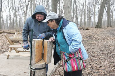 Candace H. Johnson-For Shaw Media Richard and Belinda Wagner, of Grayslake count the rings on a section of a sugar maple tree on display to see hold old it is during a maple syrup hike at Ryerson Woods in Riverwoods. Ryerson Woods is part of the Lake County Forest Preserves. (3/24/19)