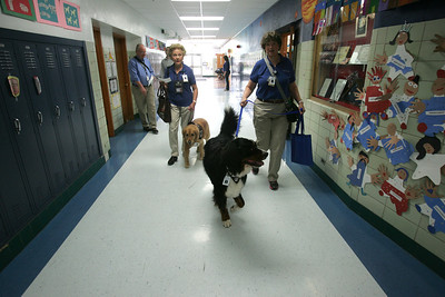 H. Rick Bamman -hbamman@shawmedia.com  Therapy dog owners Patty Reigle of Woodstock with her Golden Retriever Carly (left) and Jan Spittler of Woodstock with Diesel her 2-year-old a Bernese Mountain Dog make their way to classrooms at Jefferson Elementary School in Harvard.