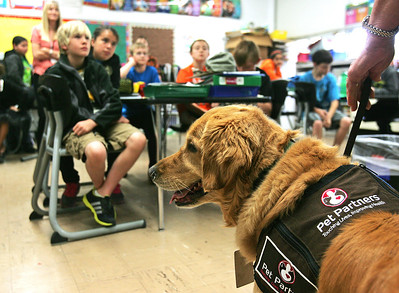 H. Rick Bamman -hbamman@shawmedia.com  Golden Retriever therapy dog Carly, along with partner Patty Reigle of Woodstock, visit with students in Nancy Eike's fourth grade class at Jefferson Elementary School in Harvard. The animal assited therpy program is designed to educate children about mental health issues while showing them how animal assisted therapy can help improve mental health. The program was hosted by Mental Health Board, School District 50 and Big Brothers and Big Sisters.