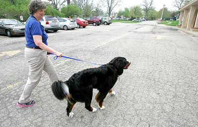 H. Rick Bamman -hbamman@shawmedia.com  Therapy dog owner Jan Spittler of Woodstock arrives with Diesel, her 2-year-old  a Bernese Mountain Dog at visit  Jefferson Elementary School in Harvard. Spittler particpates in the animal assisted therapy at hospitals, schools and nursing homes.