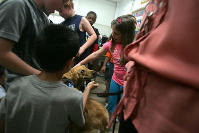 H. Rick Bamman -hbamman@shawmedia.com  Therapy dog Golden Retriever Carly visits with Nancy Eike's fourth grade class at Jefferson Elementary School in Harvard.