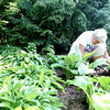 Ellen Bassett of Geneva helps weed Theresa Jaeger's garden in preparation for the Geneva Garden Club's biennial Garden Walk June 14 and 15.