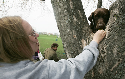 Kyle Grillot - kgrillot@shawmedia.com   Donna Nutile of Lake in the hills gives her dog Murphy a treat for climbing into a tree at the bark in the park event at the Lake in the Hills Dog Park on Saturday, MAy, 4, 2013. The event allows dogs and their owners to enjoy the 10-acre off-leash park with various activities going on throughout the day.