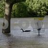 dnews_3_0513_Flooding