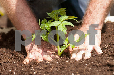 Ted Lowe secures the soil around the vegetable he planted in the Garden Works Project Saturday. David Toney for Shaw Media