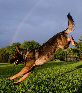 Hstyl_SUN0528_competitive_dog_COVER.jpg