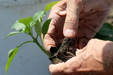 hnews_0508_Community_Gardener_03