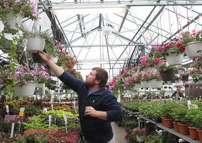 Candace H. Johnson-For Shaw Media John Ray, of Grayslake hangs up a plant in the Bernard B. Rinella, Jr. Horticulture Center during the Allendale Plant Sale in Lake Villa. Ray is a student at Allendale and volunteers four hours a day in the greenhouse. (5/11/18)