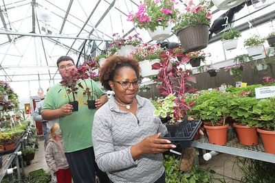 Candace H. Johnson-For Shaw Media Student Bryce Alexander Vlcek-Domoleczny, 17, of Round Lake Beach helps Alice McCoy, of Round Lake Beach carry the plants she picked out during the Allendale Plant Sale in Lake Villa. The plants were grown by Allendale's prevocational horticulture class. (5/11/18)